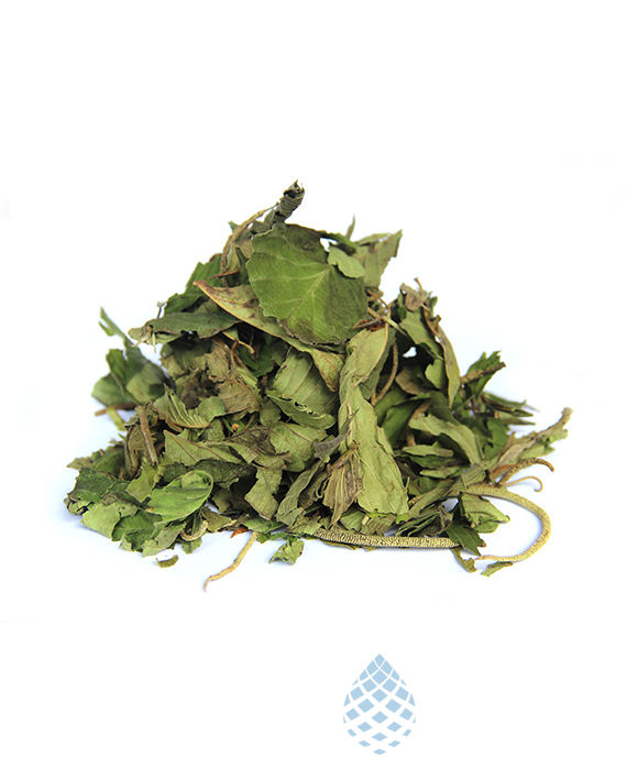 75 GR Dried Whole Organic Wild GRAVIOA (Annona muricata) Leaves from Ecuador